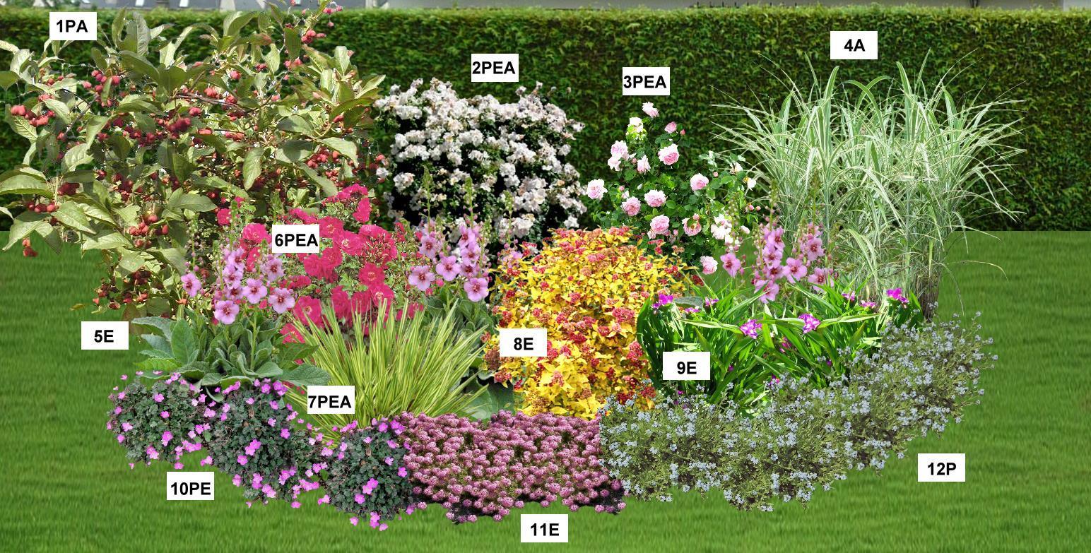Le jardin du pic vert - Massif fleuri toute l annee ...
